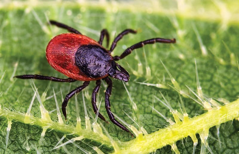 tick control services in Dunlap